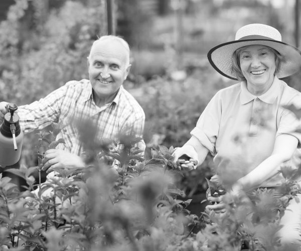Portrait of happy senior couple posing, looking at camera, while working in family garden